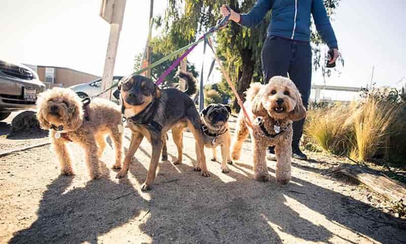 أفضل تطبيقات المشي مع الكلاب لكسب المال والتواصل مع أصحاب الحيوانات الأليفة