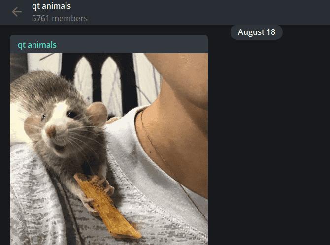 أفضل قنوات Telegram وكيفية استخدامها - شروحات