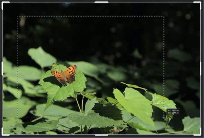 كيفية اقتصاص الصور باستخدامPhotoshop