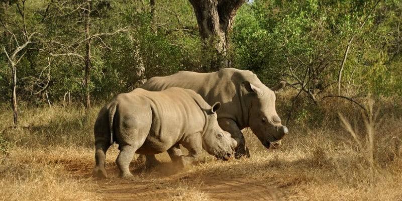 Un site internet qui vous informera sur la faune en voie de disparition à travers des jeux interactifs - Sites